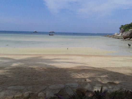 Koh Tao Cabana: Strand / Meerblick vom Resort aus
