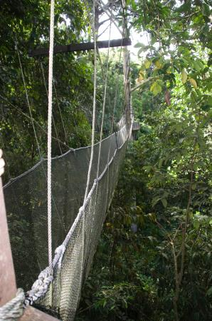 Poring Treetop Canopy Walk onward to the next tree & onward to the next tree - Picture of Poring Treetop Canopy Walk ...