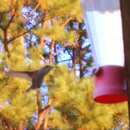 Talladega Creekside Resort: Visiting hummingbird.