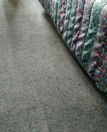 Brooks Street Motor Inn: Carpet grossly dirty and burn holes