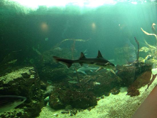 photo3 jpg picture of aquarium le 7eme continent talmont hilaire tripadvisor