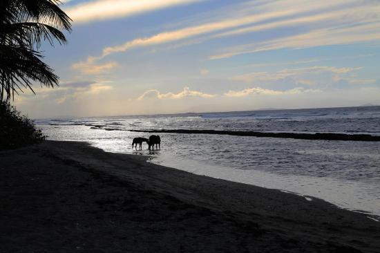 Media Luna Beach: The beach straight off the villa