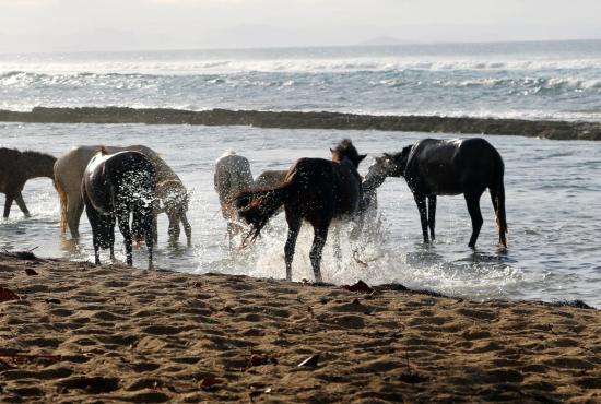 Media Luna Beach : The horses at play