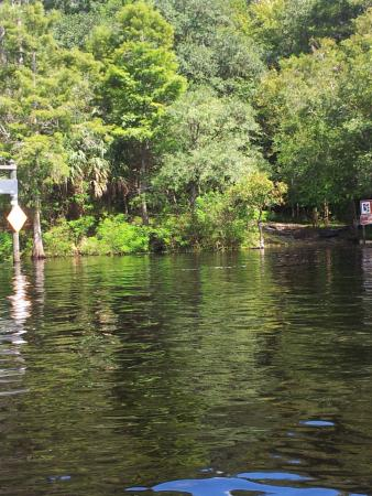 Yellow Jacket RV Resort: From the boat suwannee river