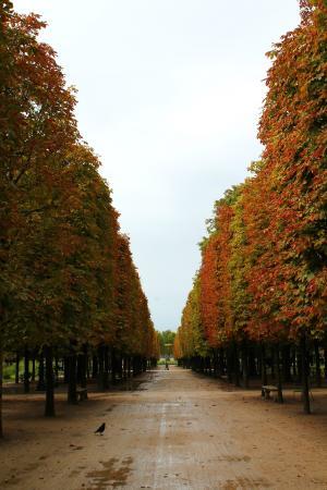 Parijs, Frankrijk: Jardin des Tuileries