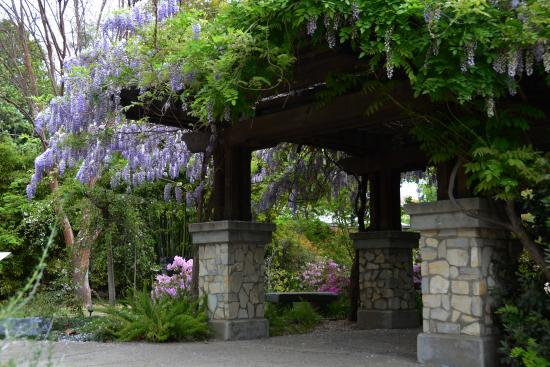 Wisteria Covered Patio Picture Of Los Angeles County