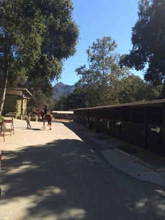 Los Angeles Horseback Riding: photo0.jpg