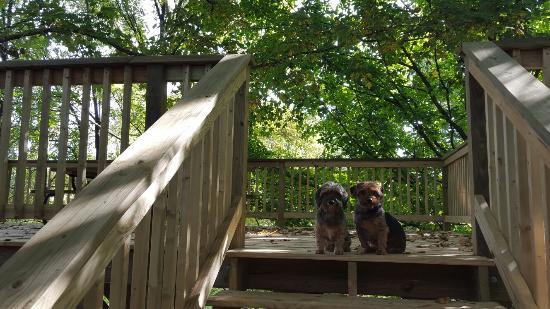 Elizabethtown, IL: Twin Oaks Cabin