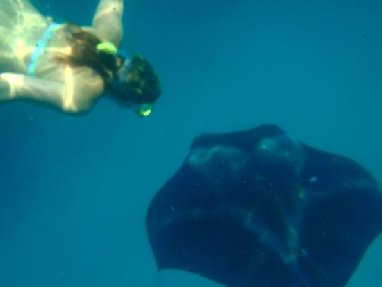 Amilla Maldives Resort and Residences: Manta Rays