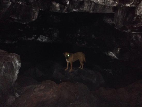 Kurtistown, Hawaje: Cinnamon the cave exploring doggie!