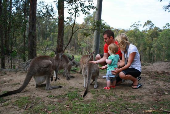 Eaglereach Wilderness Resort: Alive with native wildlife