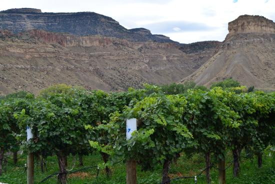 Palisade, CO: Grapes surrounded by mesas and canyons