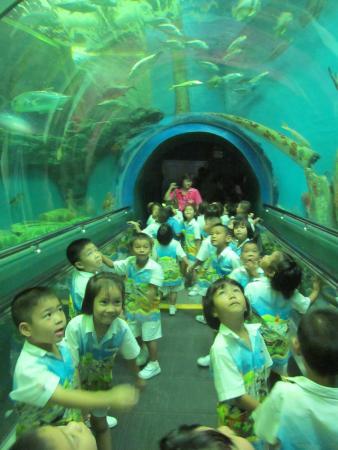 Rayong Aquarium - Picture of Rayong Aquarium, Rayong - TripAdvisor