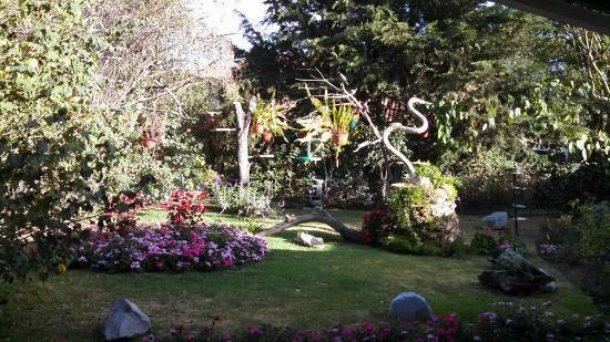 Puembo Birding Garden: a view of our garden