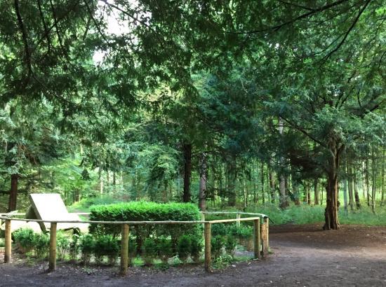 Hoersholm, Denmark: Linstows grav i Rungsted Hegn/Folehaveskoven
