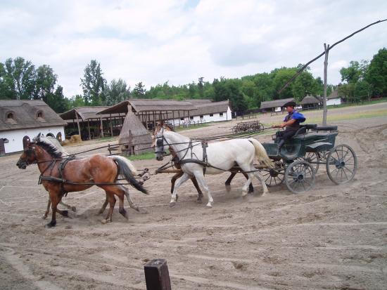 Varga Tanya Horse Show