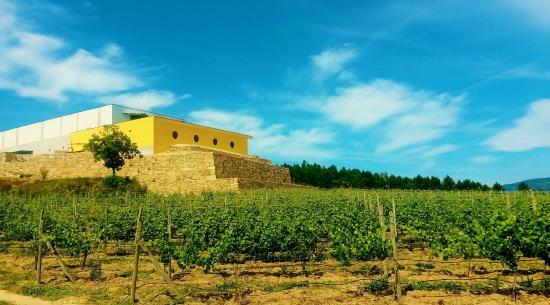 Celorico de Basto, Portugal: Adega da Quinta de Santa Crsitina