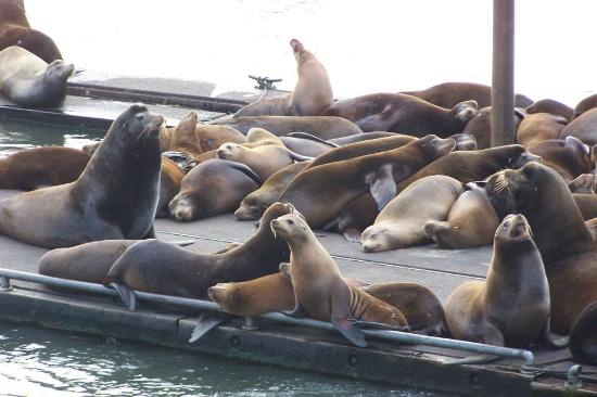 Geno's Pizza and Burgers: Seals in the bay at Astoria, OR