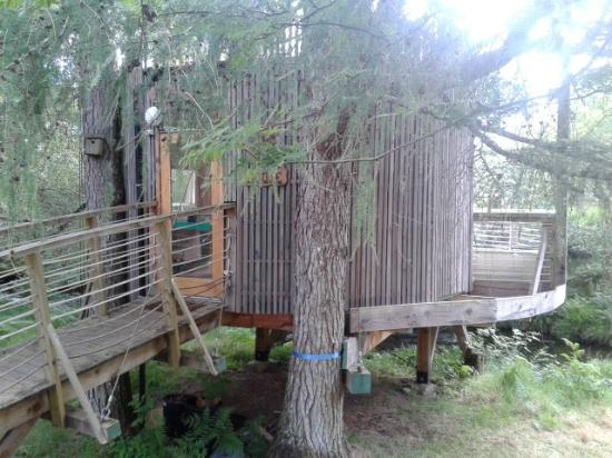Lochcarron, UK : the Tree House supported by two larch trees