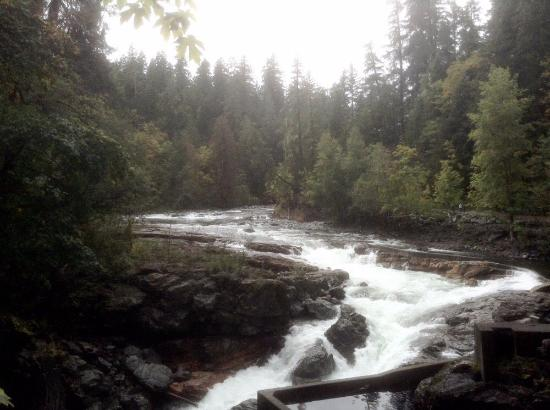 Courtenay, Kanada: Stamp River Falls, suggested by hosts