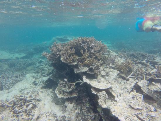 Fagamalo, Samoa: Reef