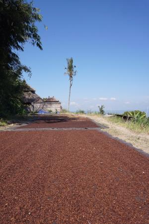 Puri Lumbung Cottages: Clove drying out in the fields