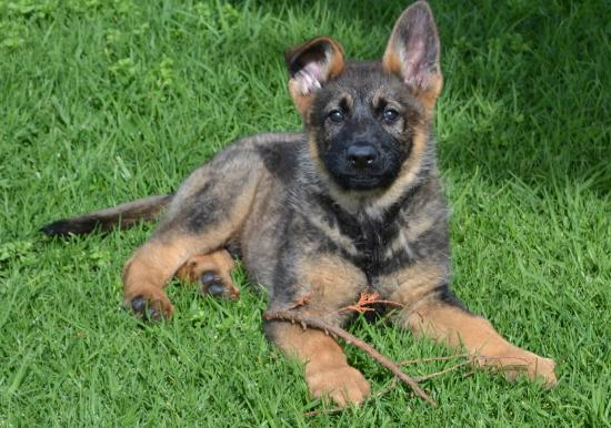 Puppies Picture Of Lawdogs Australia The Summit Tripadvisor