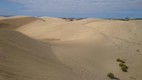 Wydmy Maspalomas - Gran Canaria - Picture of Playa de Maspalomas, Maspalomas ...