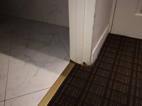 Puertas Para Baño Rosario:Puerta baño