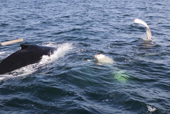 Capt Bill & Sons Whale Watch照片