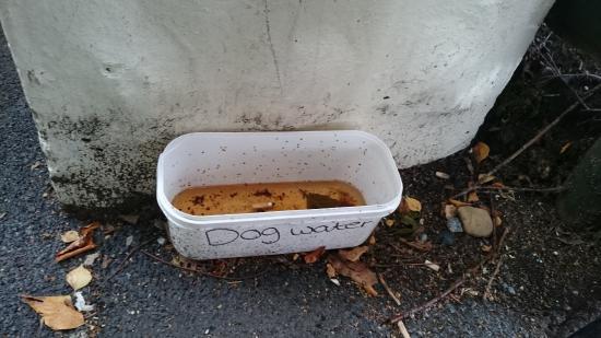 Newton Abbot, UK: Trago Mills dog water bowl...
