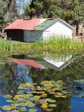 Petersen Rock Garden And Museum: Pond At Petersen Rock Garden