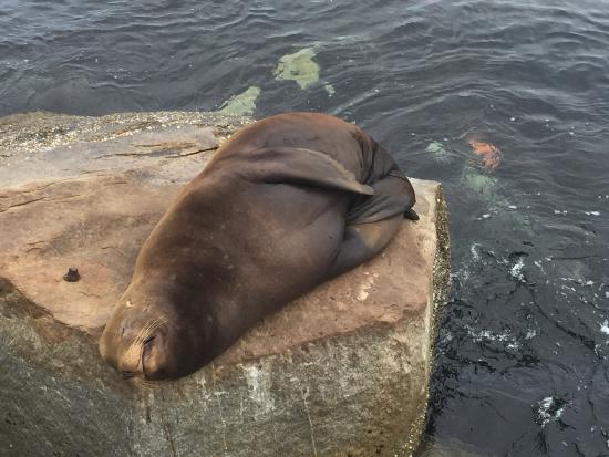 Monterey Peninsula Recreational Trail: photo9.jpg