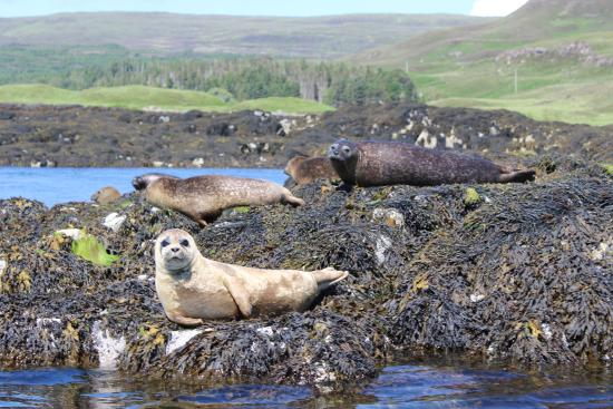 Tullochard House: Seals at Dunvegan Castle