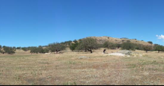 Santa Ysabel Open Space Preserve: Coyotes chasing squirrels