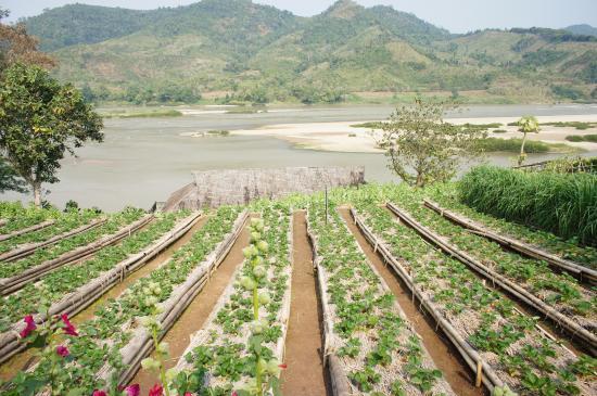 Rai Saeng Arun: fresh