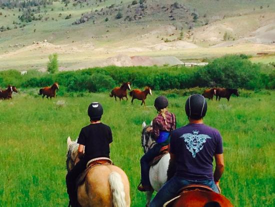 Bitterroot Ranch : yearlings galoping in front of us -simply beautiful