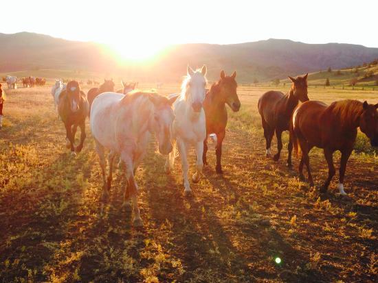 Bitterroot Ranch: sunrise...