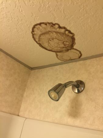 Mill Stream Country Inn: Stain on ceiling tile in shower