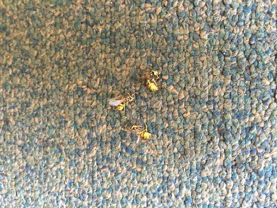 Mill Stream Country Inn: Smooshed insects in hallway carpet