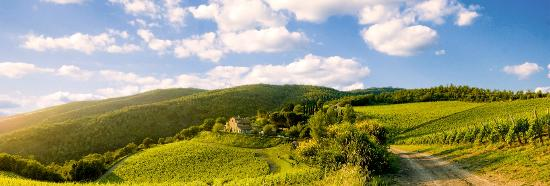 Radda in Chianti, Italy: The panoramic picture of Montemaggio