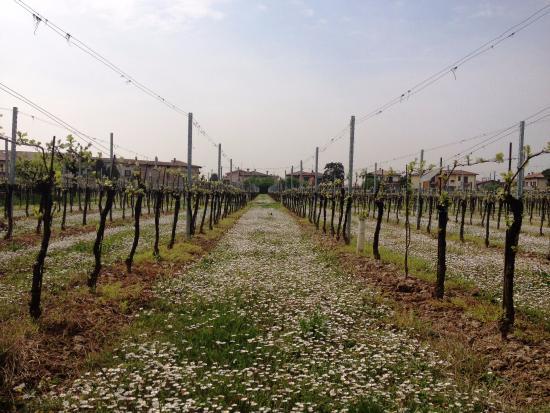 Azienda Agricola Ugo Vezzoli