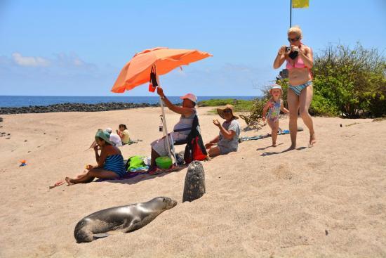 Hostal La Posada de José Carlos: Playa de la Lobería, Puerto Baquerizo