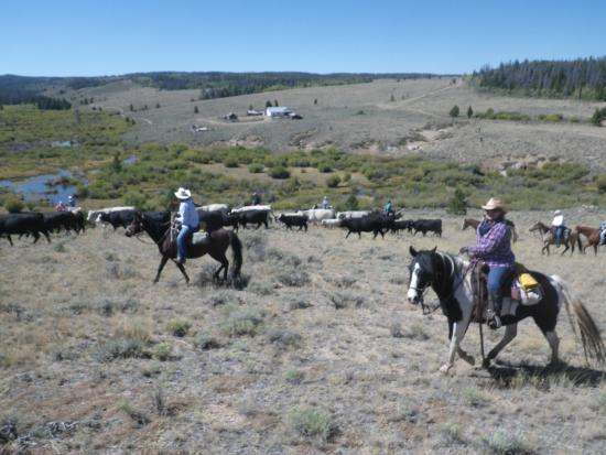 Jelm, WY: cattle round-up