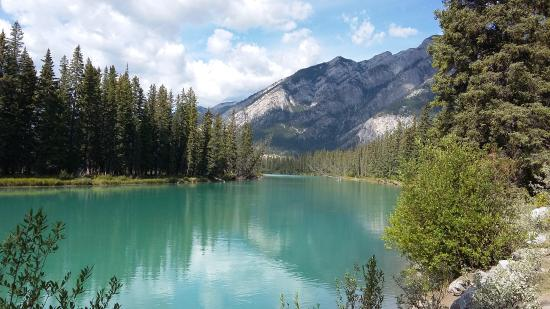 Buffaloberry Bed and Breakfast: Banff River, Three blocks away
