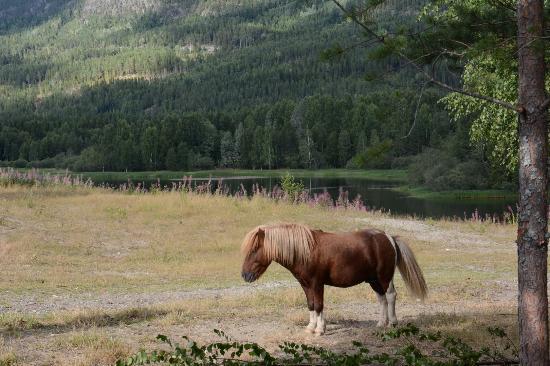 Nes Municipality, Noruega: Ponnier