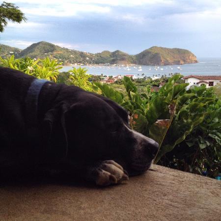 Las Palmas B&B: Atlas the big softie with his view from the patio