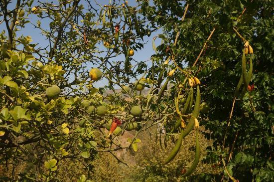 photo4.jpg - Picture of Botanical Park & Gardens Of Crete ...