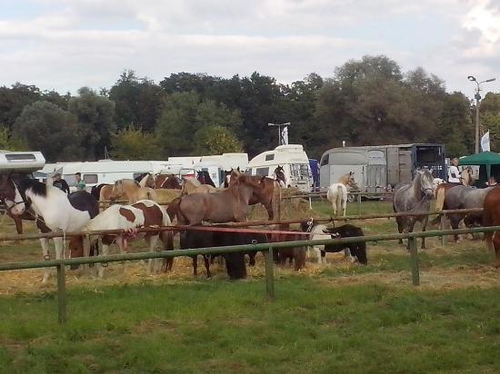 pferdemarkt havelberg