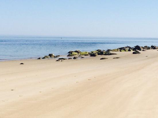 Crane beach ipswich uk
